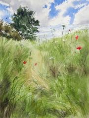 Path-through-the-meadow