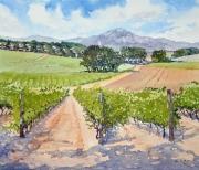Vineyards, South-of-France