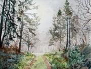 Forest path through the mist